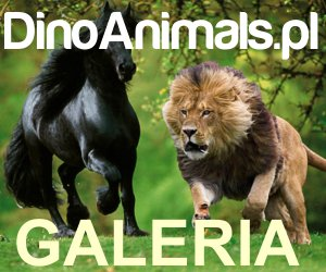 Gallery DinoAnimals.pl