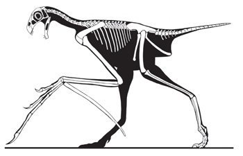 Yi-qi-skeletal-reconstruction-Xu-et-al-350-px-tiny-May-2015
