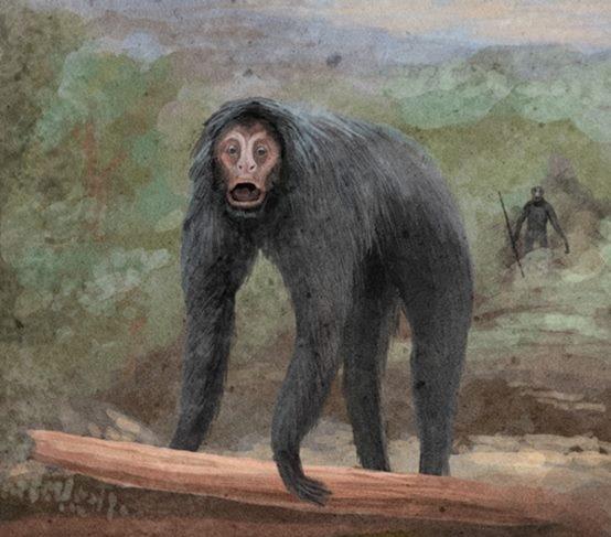Małpa de Loysa