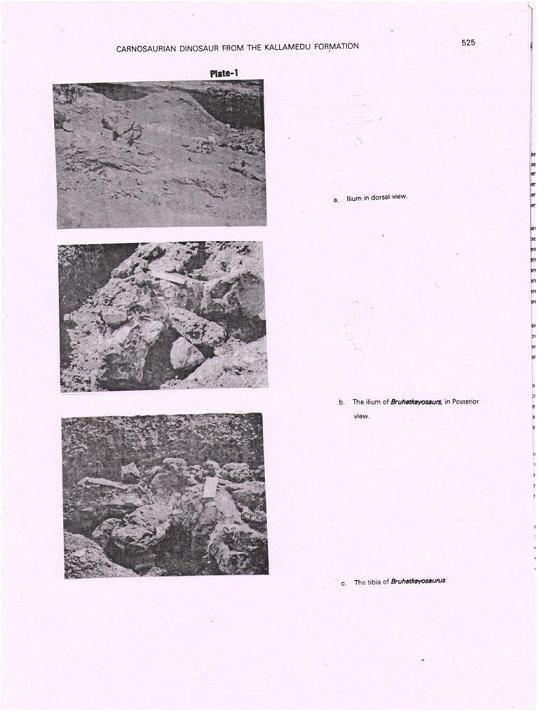 Bruhathkayosaurus zdjęcia