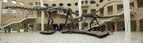 A visit to Fernbank Museum of Natural History.