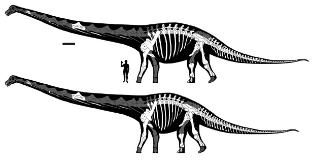 Dreadnoughtus tors
