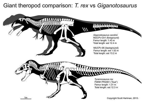 Sue vs Giganotosaurus