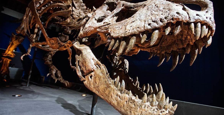 Tyranozaur Trix - królowa okresu kredy