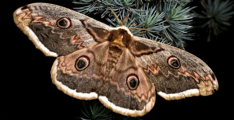 Owady uznawane za wymarłe w Polsce oraz odkryte ponownie po latach