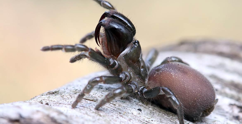 Interesujące gatunki pająków spotykane w Polsce