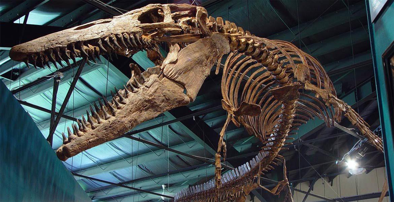 Tylozaur - postrach morskich głębin