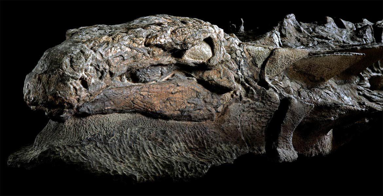 Borealopelta - Mona Lisa wśród dinozaurów