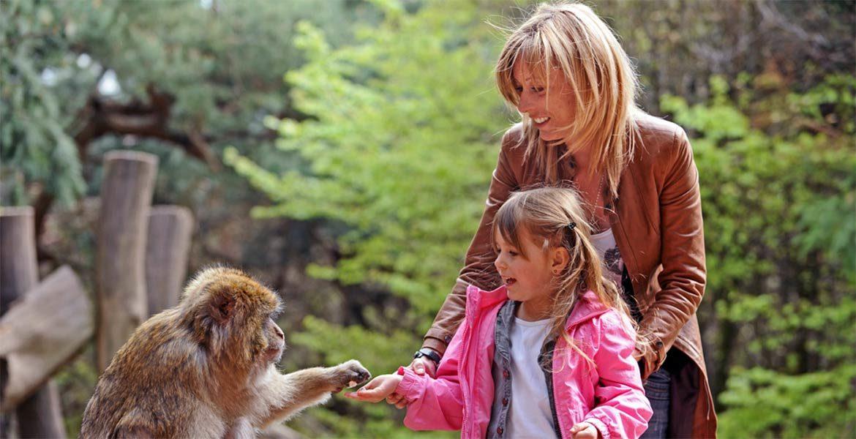 Park La Montagne des Singes - małpia góra
