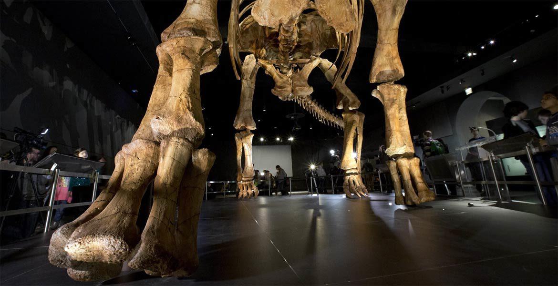 Patagotitan – (Nie) Największy znany dinozaur