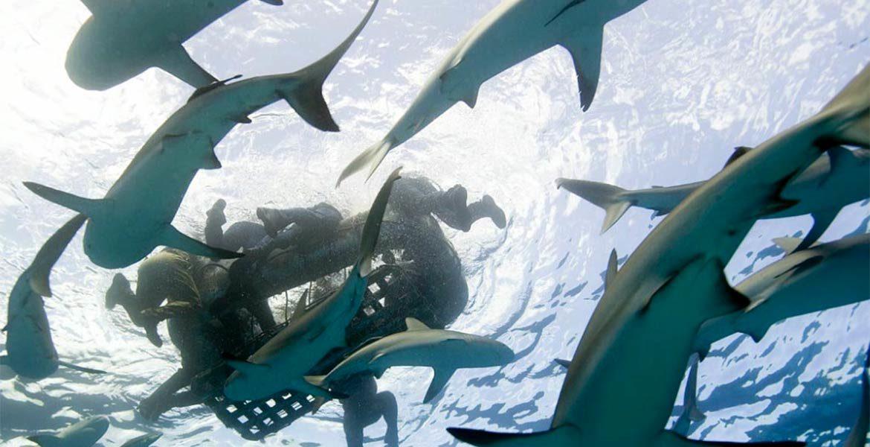 Katastrofa okrętu USS Indianapolis i rola rekinów