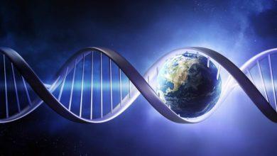 """Photo of Polemika: """"Ewolucja to tylko hipoteza"""""""