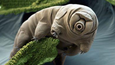 Photo of Proces powstawania nowych gatunków