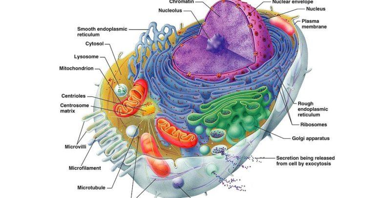 Photo of Nieredukowalna złożoność