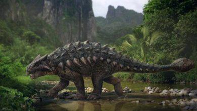 Photo of Ankylozaury posiadały wydajny system chłodzenia