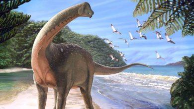 Photo of Kręg ogonowy tytanozauryda z Brazylii