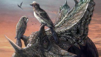 Photo of Mirarce eatoni – kredowy ptak!