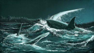 Photo of Rekiny atakowały Pteranodona