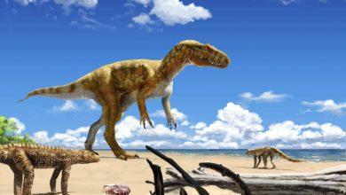 Photo of Saltriovenator zanellai – nowy dinozaur!