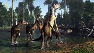 Photo of Weewarrasaurus pobeni – nowy gatunek ornitopoda!