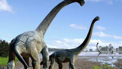 Photo of Tytanozaur i być może teropod z Bułgarii