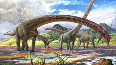 Photo of Pierwszy dinozaur z 2019 roku!