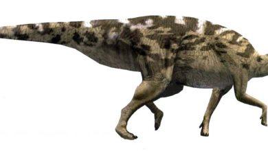 Photo of Pareisactus evrostos – nowy ornitopod