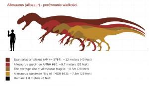 Allosaurus porównanie wielkości