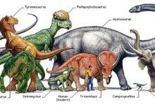 Photo of Dinozaury – mity a rzeczywistość