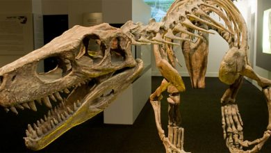 Photo of Najstarsze znane dinozaury cz. I. Herrerasaurus