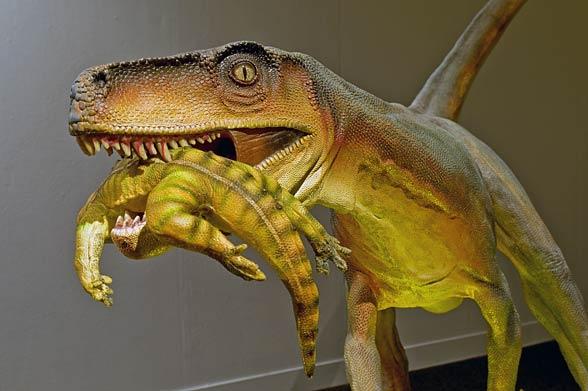 Herrerazaur (Herrerasaurus)