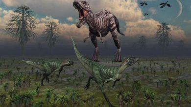 Photo of Najstarsze znane dinozaury cz. II.  Lesothosaurus