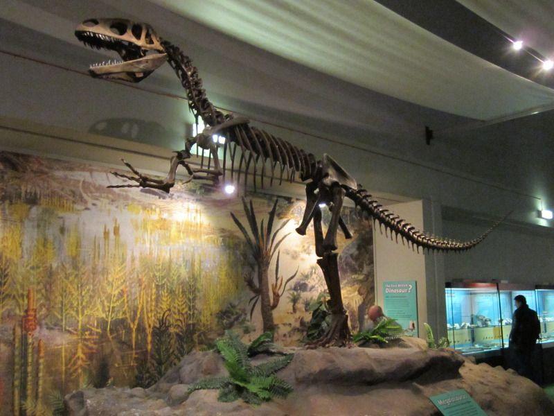 Megalozaur (Megalosaurus), World Museum Liverpool.