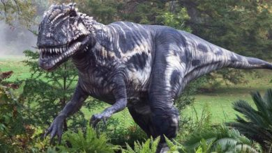 Photo of Pierwsze odkryte dinozaury – Iguanodon