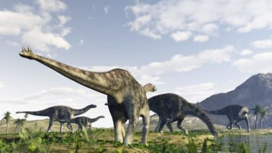 Photo of Pierwsze odkryte dinozaury – Cetiozaur
