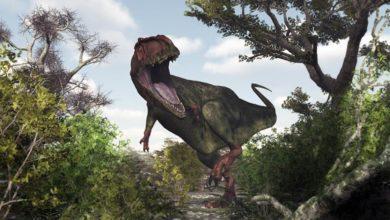 Photo of Najdłuższe drapieżne dinozaury. Teropody Top 10