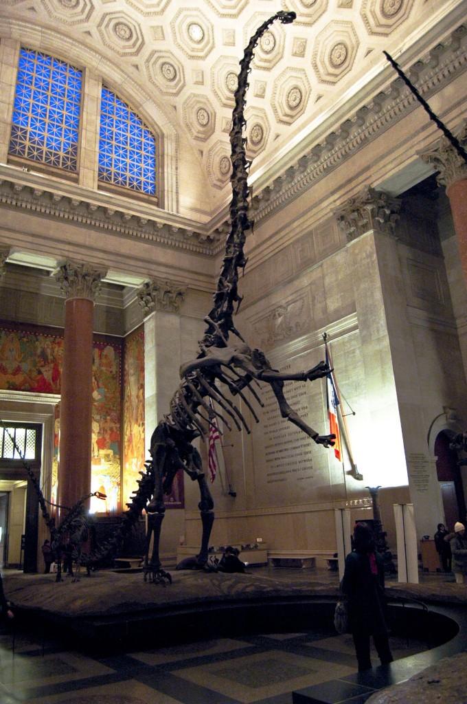 Barosaurus barozaur