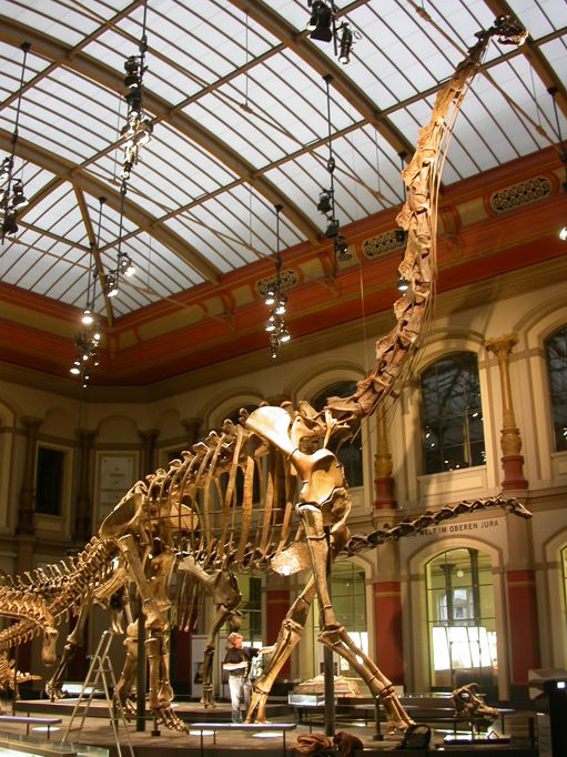 Brachiosaurus szkielet