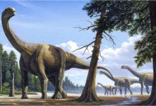 Photo of Zauropody – największe dinozaury