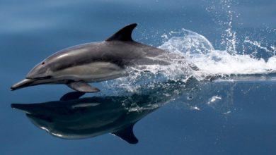Photo of Delfin – najlepszy pływak wśród ssaków