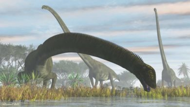 Photo of Dinozaury o najdłuższych szyjach