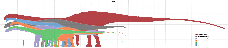 Najdłuższe dinozaury