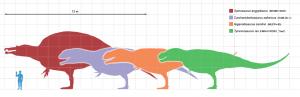 Największe teropody - porównanie wielkości