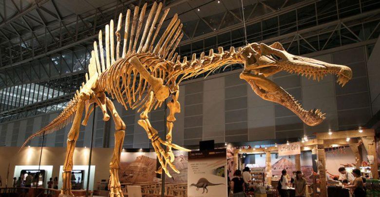 Spinosaurus (spinozaur)