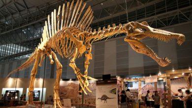Photo of Najcięższe drapieżne dinozaury. Teropody Top 10