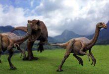 Photo of Najszybsze dinozaury cz. I – Gallimimus