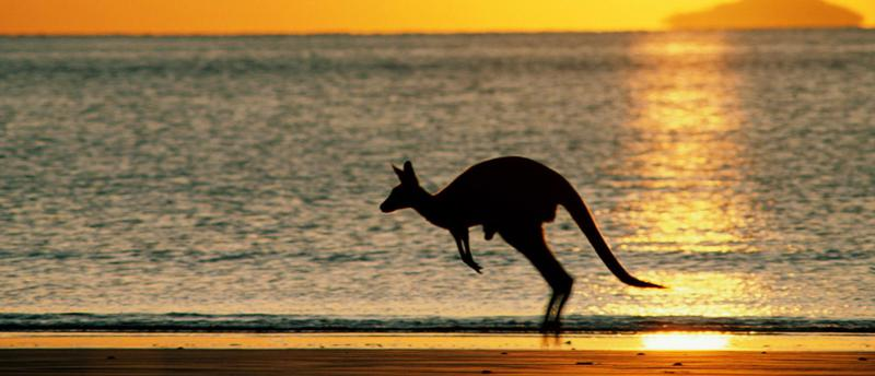 Kangur osiąga prędkość dochodzącą do 90 km/h.