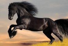 Photo of Koń – przyjaciel człowieka