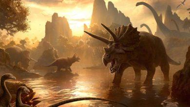 Photo of Największe ceratopsy – Top 10