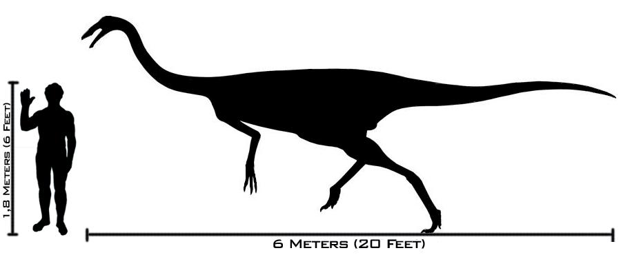 Gallimimus - człowiek porównanie wielkości